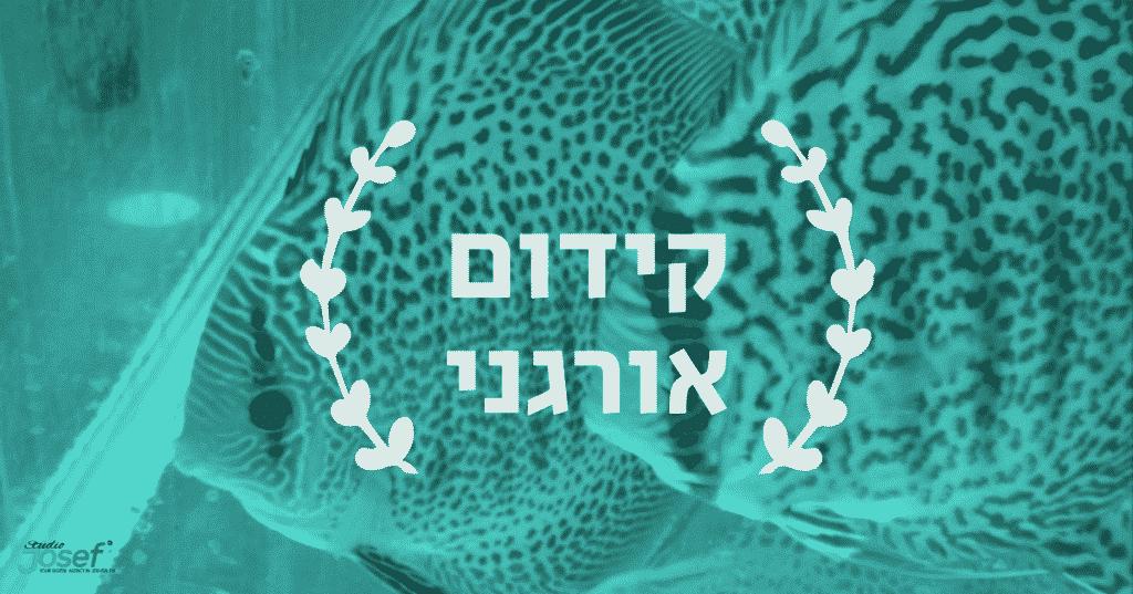 קידום אורגני בירושלים או לשבת ללבד בחושך...